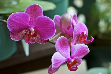 Orchid2w
