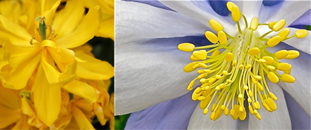 YellowDiptych