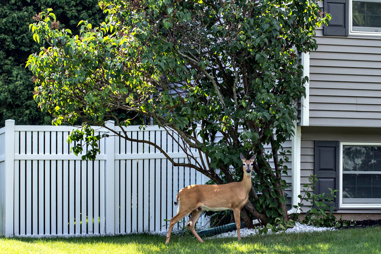 DeerFence_blog