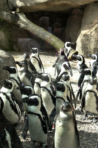 Penguins_blog