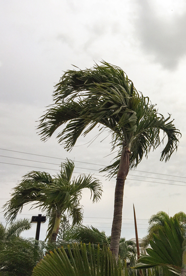 WindyPalms_blog
